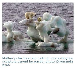 PolarBearTruthCaption