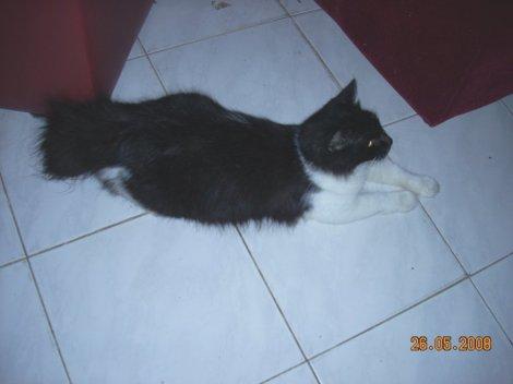 catcat3