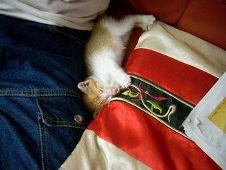 Kitkit Thong family cat